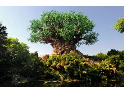 7 árvores incríveis que viraram atrações turísticas.