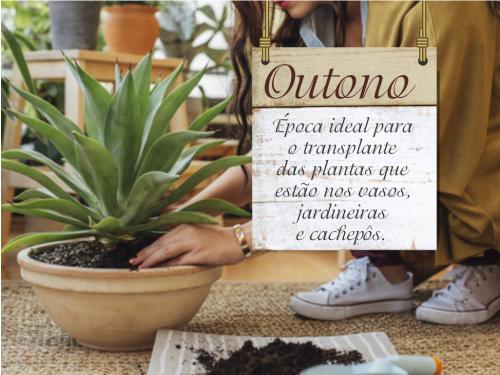 Como cuidar de suas plantas no outono.
